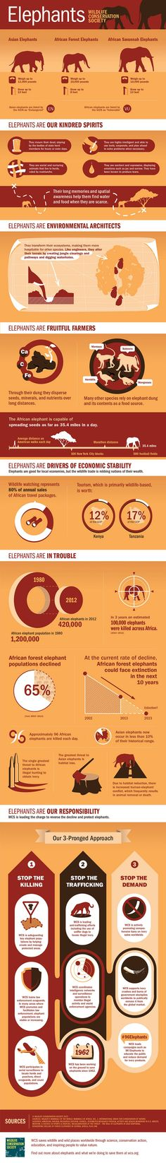 On World Elephant Day, 6 Big Reasons to Save the Species