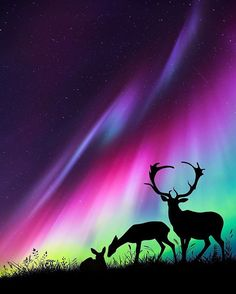 Experiencing the all-natural sensation of aurora borealis Beautiful Sky, Beautiful Landscapes, Beautiful Pictures, Beautiful Scenery, Aurora Borealis, Northen Lights, Belle Photo, Amazing Nature, Night Skies
