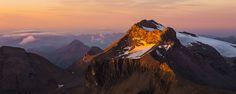Swiss alpine beauties