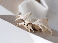 The Venezuelan Poodle Moth is pretty adorable (Yes, it's r Toy Art, Venezuelan Poodle Moth, Silkworm Moth, Cute Moth, Animals And Pets, Cute Animals, Cool Insects, Beautiful Bugs, Weird Creatures