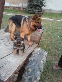 GSDs                                                                                                                                                                                 More