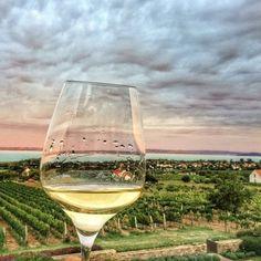 @Regrann from @esztella_cseh - borúra bor #vineyard #lakebalaton #balaton #tb #mostsajnostanulok #regrann