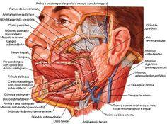 Aula de Anatomia - Sistema Digestório                                                                                                                                                                                 Mais
