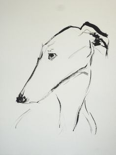 Spanish Greyhound (Galgo), Indian Ink on Paper, 56 x 42 cm