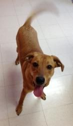 Ally Brown is an adoptable Shepherd Dog in Thomasville, NC. Ally Brown is believed to be a shepherd/beagle mix who was born around April 2012. She was found on the side of the road in Archdale. She ...