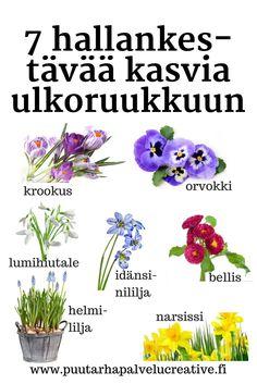 Sääennuste lupaa lämmintä, ja tekisi mieli jo laittaa kukkia ruukkuun. Tässä seitsemän kasvia, jotka eivät säikähdä pientä hallaa. Jos yöpakkasta tule enemmän kuin 3-4 astetta, kääri kukat pakkasharsoon. #hallankestäviä #ruukkukukkia