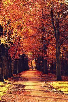 Marlot wood Den Haag - Autumn in Marlot Wood, The Hague, Holland