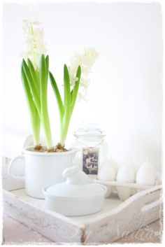 Lovely hyacinths for easter #easter #flower