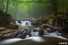 The magic forest by Jordi Amela, via 500px
