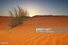 Stock Photo : Desert Bush Sun Rise