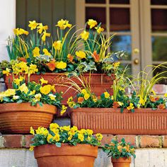 colorful fall containers from Southern Living