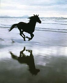 gorgeous horse on beach