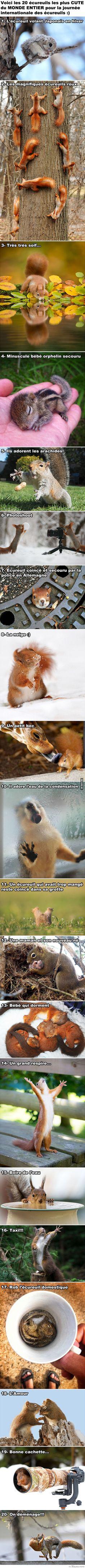 Aujourd'hui c'est la Journée Internationale des Écureuils. À tous ceux et celles qui adorent les animaux... voici 20 écureuils adorables et merveilleux :)