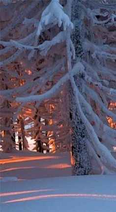 #Winter beauty #travel #adventure #vacation #holiday #travelphotography #tour #tourism #flight #easyjet #trips #overseastravellers #nature #scenery #beach #solotravel #view #waterfalls #hotel #resort #fairyqueentravel #phuket #island #movie #movies Winter Szenen, Winter Love, Winter Magic, Winter Christmas, Winter Sunset, Holiday, Expressions Photography, Photos Voyages, Snow Scenes