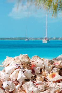 Queen Conch is so delicious and has real Island charm. Simone you are amazing.