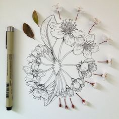 Flowers in Progress: Scientific Illustrator Noel Badges Pugh Taunts Us with Spring illustration flowers