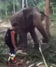 Discover & share this Elephant GIF with everyone you know. GIPHY is how you search, share, discover, and create GIFs. Funny Animal Images, Funny Animals, Funny Jokes, Hilarious, Funny Gifs, Haha, Hey Man, Animation, Stupid People