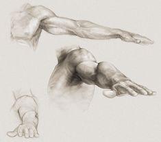 Arm study photo by bill