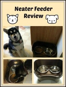 Neater Feeder Review - learn why everyone who has a Neater Feeder swears by it and how it can drastically reduce pet messes. I was amazed at how it helped my Alaskan Malamute!