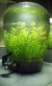 Aquarium inspiration - Beverage Dispenser Tank