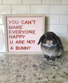 Quality advice from one bunny to any hooman. Quality advice from one bunny to any hooman. Cute Baby Bunnies, Funny Bunnies, Cute Funny Animals, Cute Baby Animals, Cute Babies, Bunny Meme, Cute Bunny Pictures, Bunny Pics, Pet Rabbit