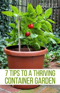 Tips for a Thriving Container Garden- Grow healthy and productive plants in containers of all types with these helpful gardening tips. | Premeditated Leftovers