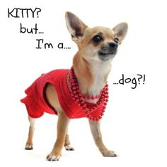 This one is from our website Ace-petnames.com.  How Not To Name Your Dog....