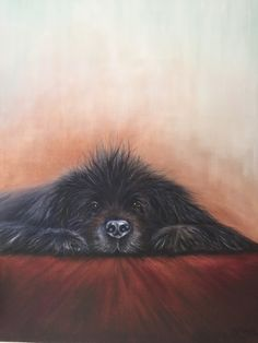"""Newfoundland dog.""""Always looking over you"""" by Barbara Simoes in oils July 2015…"""