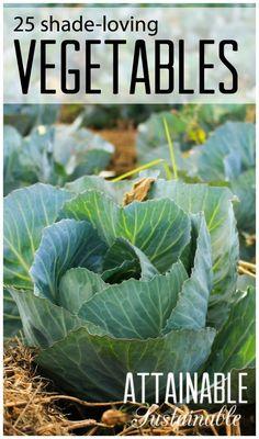 Grow a vegetable garden in the shade. Shade loving crops . ~ Homestead ~ Preparedness ~