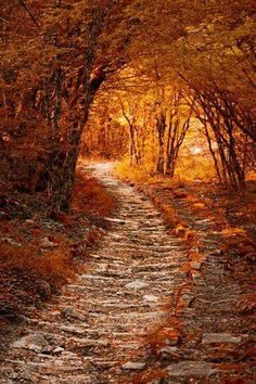 Such a gorgeous path to walk on!