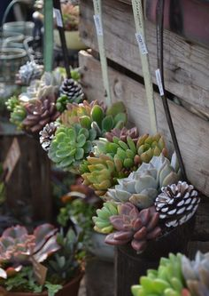 20 Succulent Planters You'll LoveI LOVE succulents! In the plant world you could consider them as exotic beauties… Unique, colorful and dazzling.I decided to share some of my favorite planters. Succulent Gardening, Cacti And Succulents, Planting Succulents, Container Gardening, Planting Flowers, Succulent Planters, Succulent Arrangements, Hanging Planters, Flowers Garden