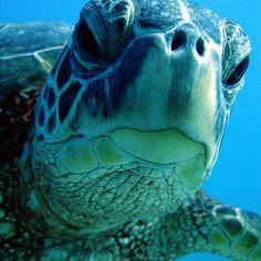 Hi. love love love sea turtles