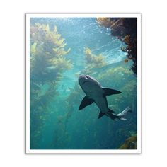 JP London POS0003 Ocean Shark Life Peel and Stick Removable Wall Decal Mural