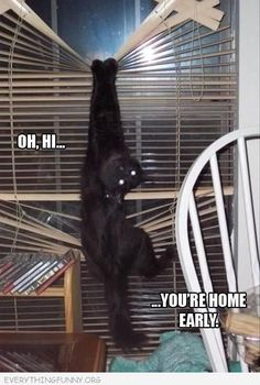Lmao silly cat! I can see me walking into the house & finding Salem like this, lol