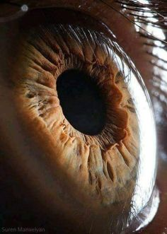 A micro photo of an eye