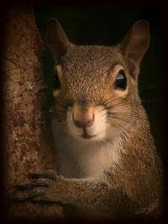 Portrait of Gray Squirrel. : Portrait of Gray Squirrel. Animals And Pets, Baby Animals, Funny Animals, Cute Animals, Wild Animals, Black Squirrel, Cute Squirrel, Squirrels, Squirrel Pictures