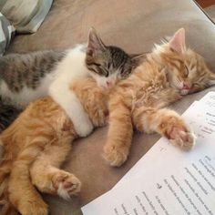 58 New Ideas for cats and kittens funny night Cute Kittens, Ragdoll Kittens, Tabby Cats, Animals And Pets, Funny Animals, Cute Animals, Pretty Cats, Beautiful Cats, Animals Beautiful