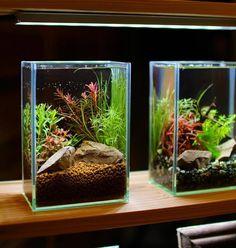 A cute nano tank Aquascaping, Aquarium Fish Tank, Planted Aquarium, Fish Tank Terrarium, Nano Cube, Small Fish Tanks, Aquarium Landscape, Betta Fish Tank, Nano Tank