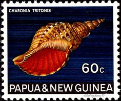 Papua New Guinea.  SHELL. TRITON'S TRUMPET. Scott 277  A58, Issued 1968 Aug 28, 60. /ldb.