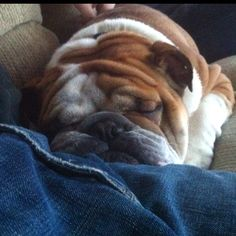 Sleeping in my lap.
