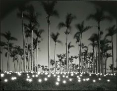 tokihiro sato, 1997 #365 palm; source: impossible things