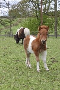 Sunny the pony © RSPCA