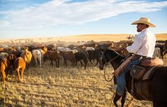 Bar W Cattle Drives- Retreat to the beautiful Bar W Guest Ranch on Spencer Lake in Northwest Montana
