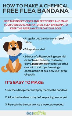 """Did you know that even """"chemical free"""" commercial flea bandanas contain a toxic insecticide called permethrin? Don't be fooled by the marketing. Here's how to avoid permethrin for dogs. Flea Remedy For Dogs, Flea Bath For Dogs, Dog Flea Remedies, Tick Repellent For Dogs, Insect Repellent, Doggies, Pet Dogs, Dogs And Puppies, Puppy Care"""