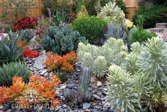 Landscaping San Luis Obispo - Gardens by Gabriel - Portfolio of Central Coast Drought Tolerant Landscape Design Installation