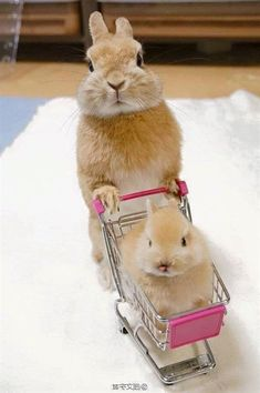 Cuteness Overload: Bunnies Take Over Cats as the Cutest Pet -