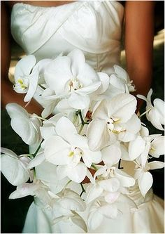 bridal bouquet / all white orchids <3
