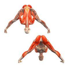 Wide-legged forward bend with hands on hips - Prasarita Paddotanasana easy - Yoga Poses | YOGA.com