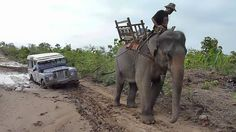 When no one is near to help...the pachyderm