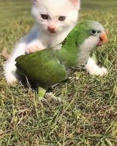 Cute Funny Babies, Cute Funny Animals, Cute Baby Animals, Funny Cute, Animals And Pets, Funny Animal Videos, Funny Animal Pictures, Funny Birds, Cute Stories